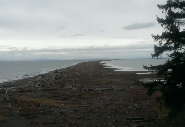 The Dungeness Spit is a 5.5 mile stretch of land that jets out into the Straight of Juan de Fuca.